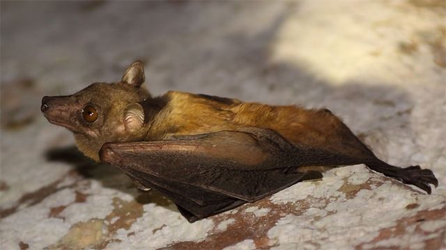 Why Are Bat Viruses So Deadly?