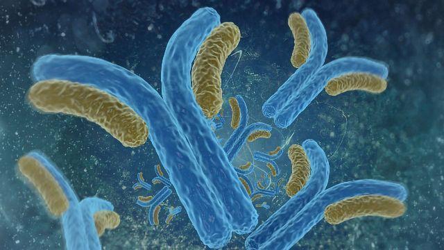 The Therapeutic Antibody Revolution