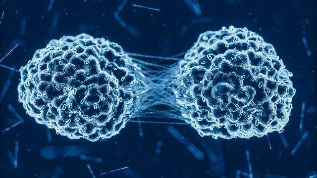 Shape-shifting Stem Cells Are Key to Cancer Metastasis