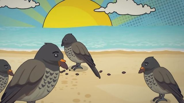 Charles Darwin's Theory of Evolution Explained