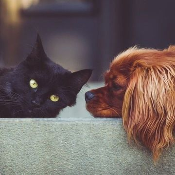 Poop Analysis Suggests Pets Are Exposed to Harmful Chemicals