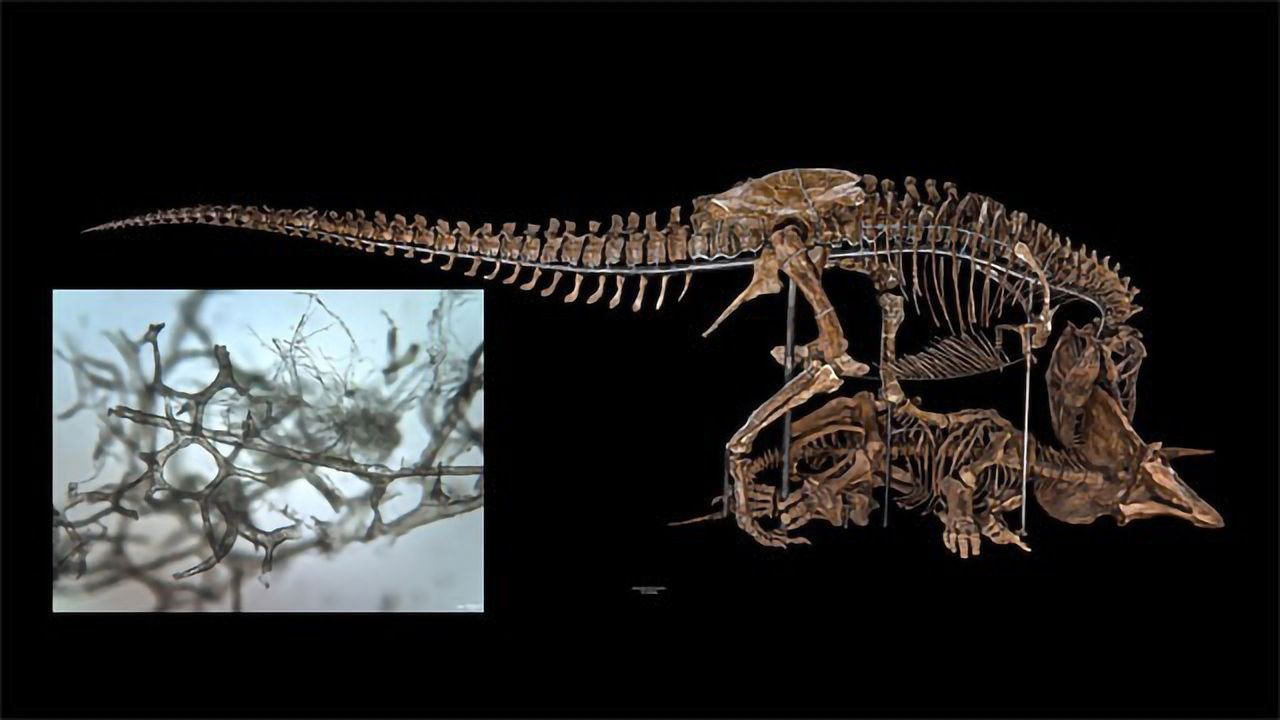 How Have Dinosaur Blood Vessels Survived for Centuries?