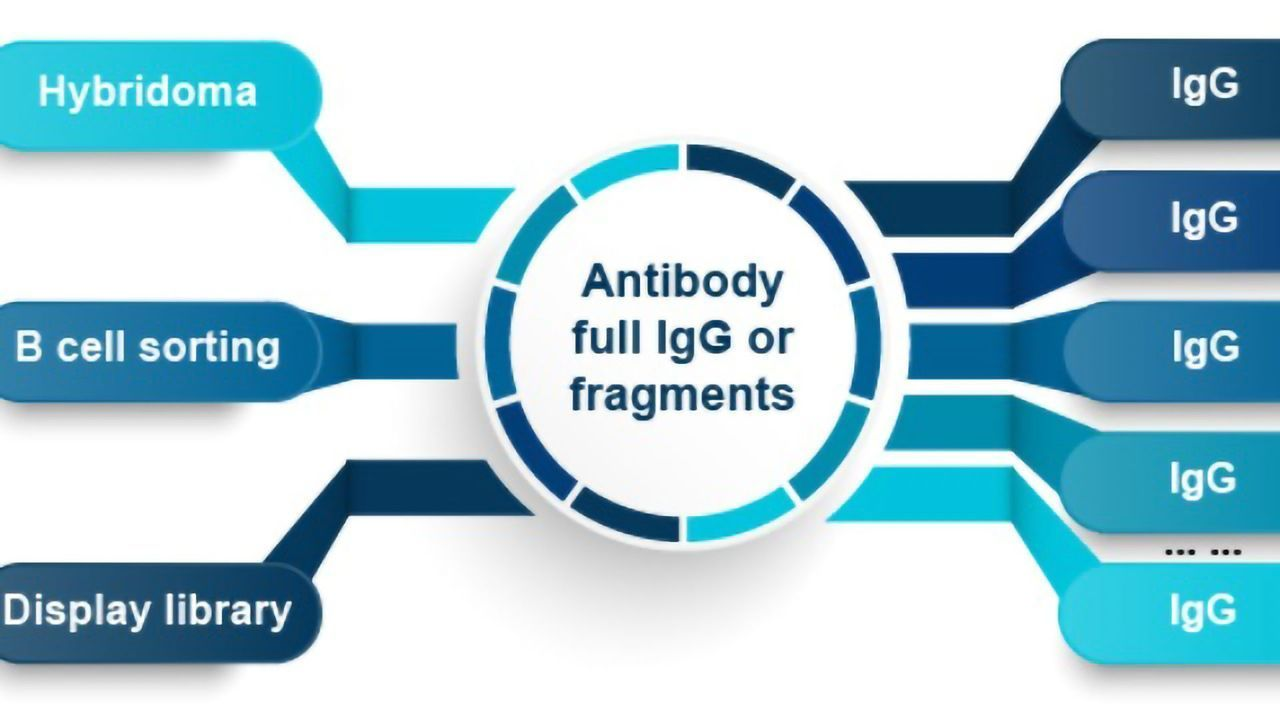 High Throughput Gene to Antibody Production to screen MORE