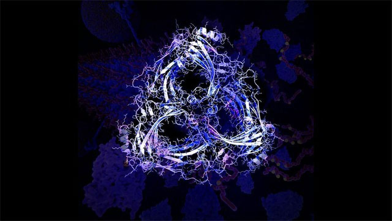 Dementia Protein Stops Tau Being Cleared From the Brain