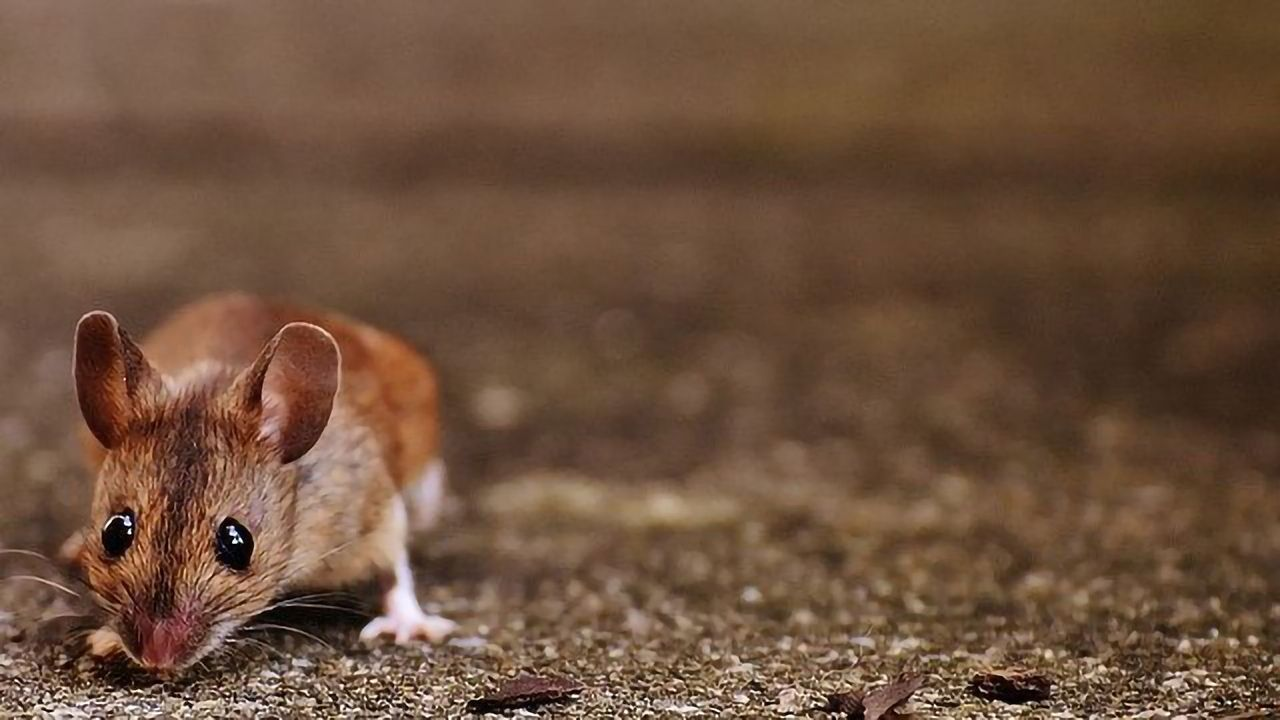 Cracking the Mouse Communication Code