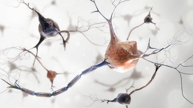 Processes That Cause Parkinson's Point to Potential Treatments