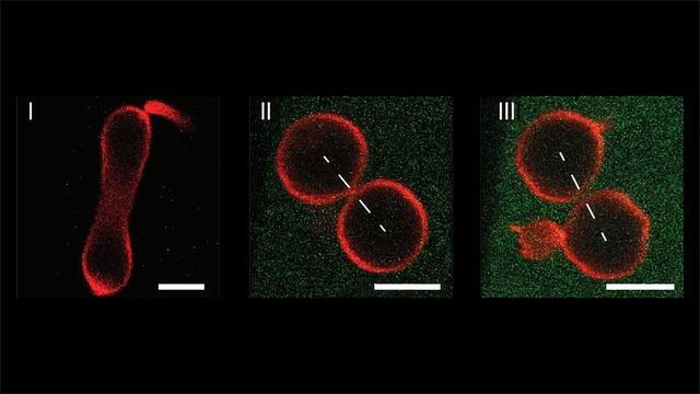 Mechanically Controlled Division of Artificial Cells