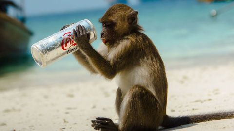 What Makes a Monkey Drink Alone?