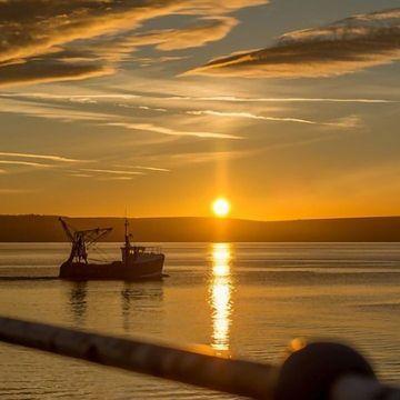 Illegal Fish Trade Risks Local Economies