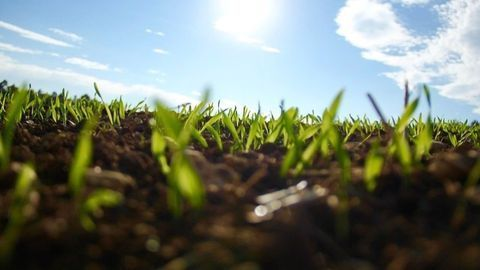 Cover Crops Boost Soil Microbiome