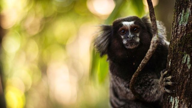 Marmoset Stem Cells Could Be New Way To Study Parkinson's