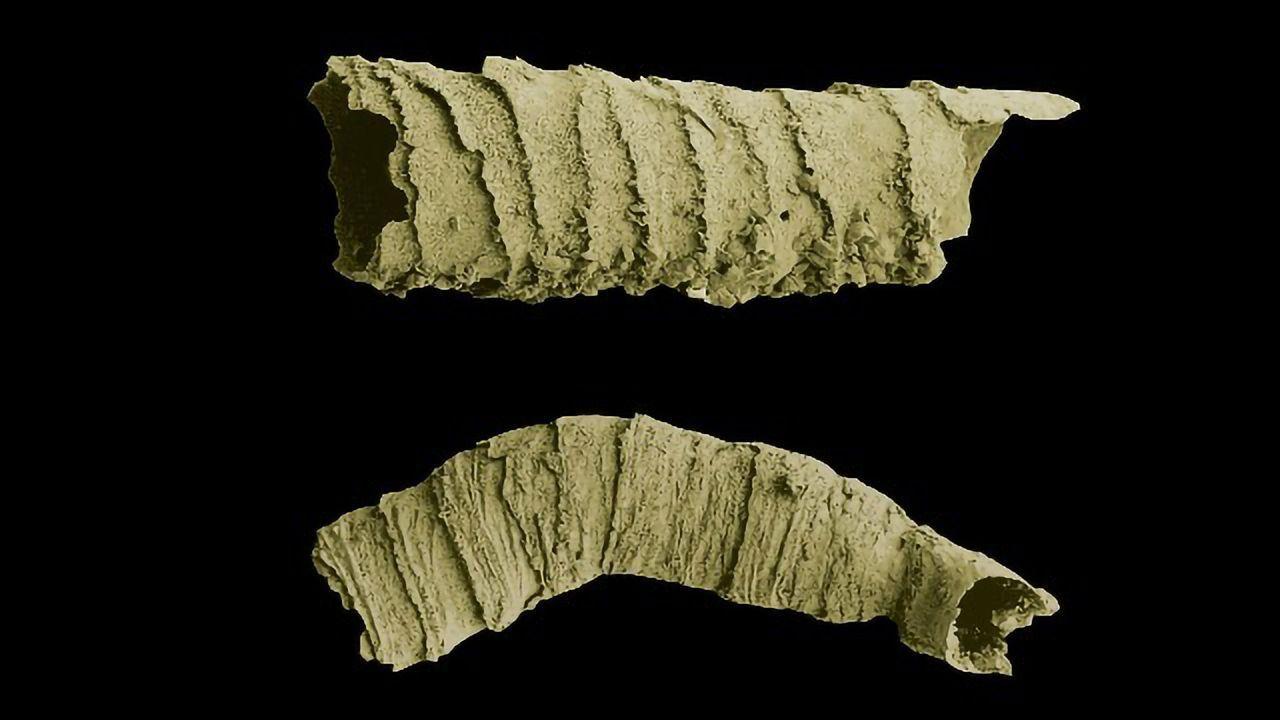 Ancient Animals: Cloudina