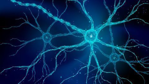 Uncovering the Role of Amyloid in the Healthy Brain
