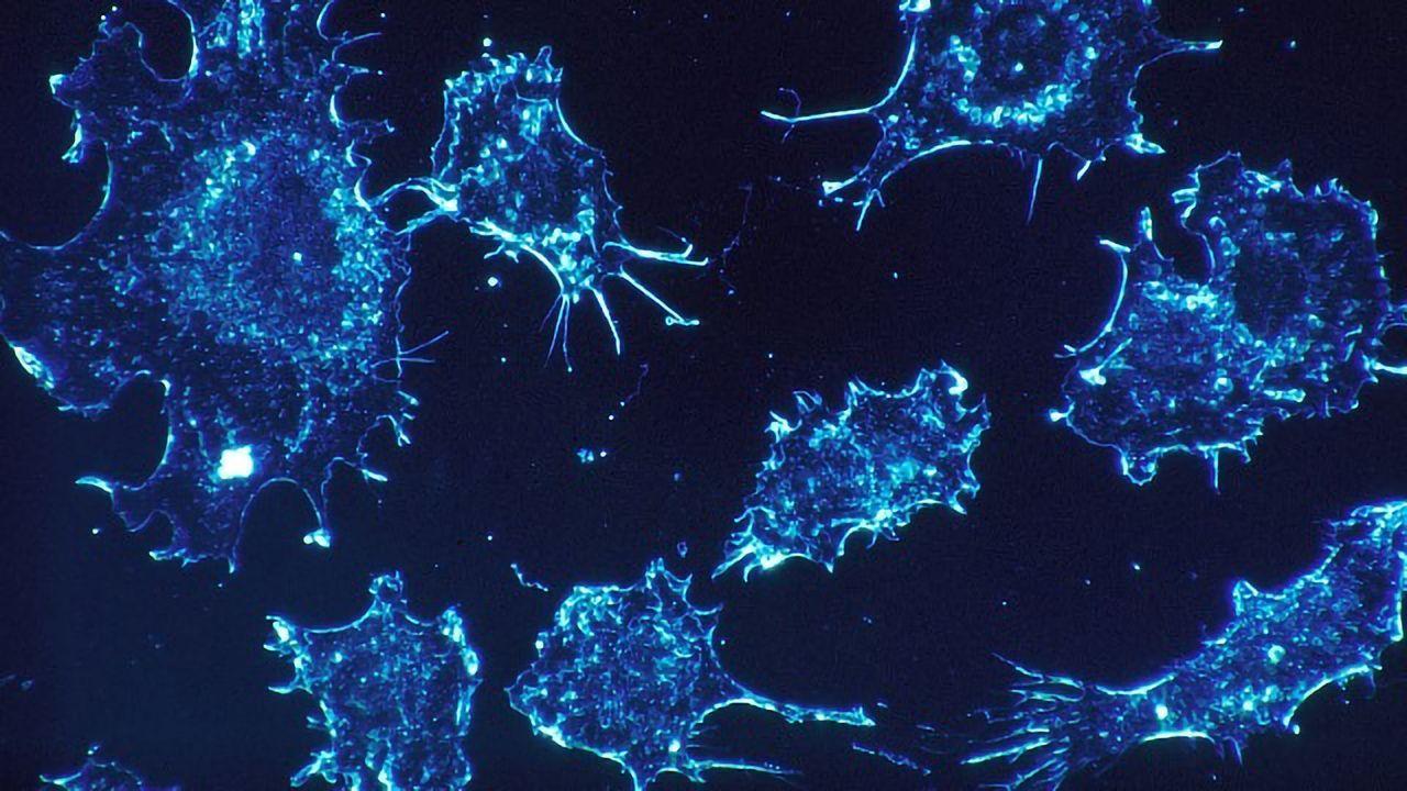New Platform for Cancer Diagnostics and Drug Testing Developed
