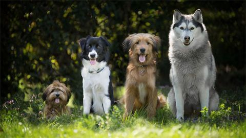 Which Is the Bravest Breed? Study Examines Dog Behavior