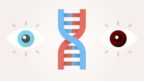 Gene vs Allele: Definition, Difference and Comparison