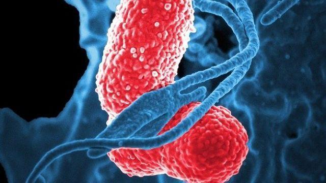 Bacteria Thwart Antibiotics Using a Crystalline Shield