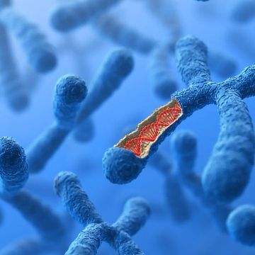 Using Single Cells To Get the Whole Picture of the Epigenome