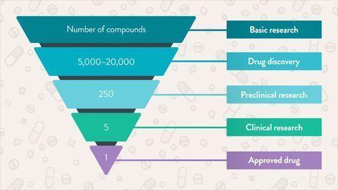 Exploring the Drug Development Process