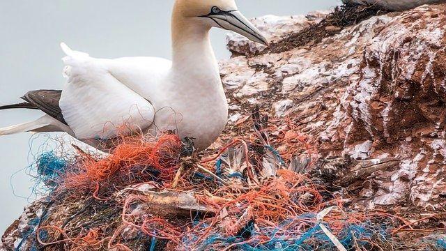 Major Change Needed To Resolve the Plastic Crisis