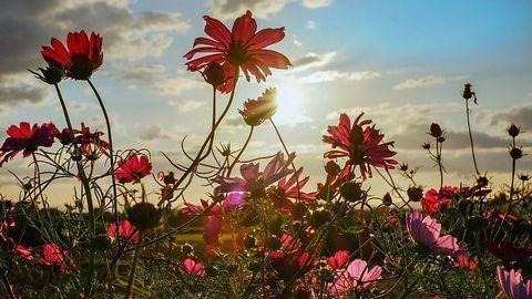 """How Plants Avoid """"Sun Burn"""""""