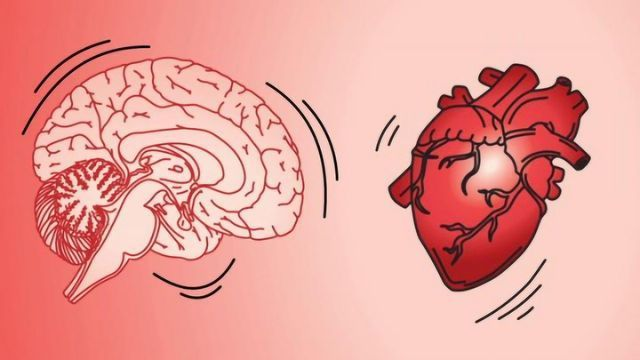 Researchers Found That the Brain Jiggles When the Heart Beats, and It's Helping Them Classify Neurons