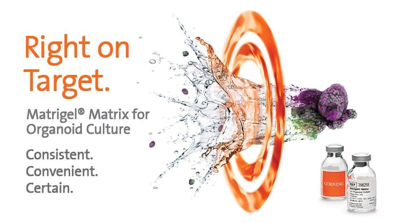 Corning® Matrigel® Matrix for Organoid Culture