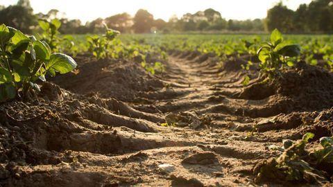 Happy Microbes, Healthy Soil