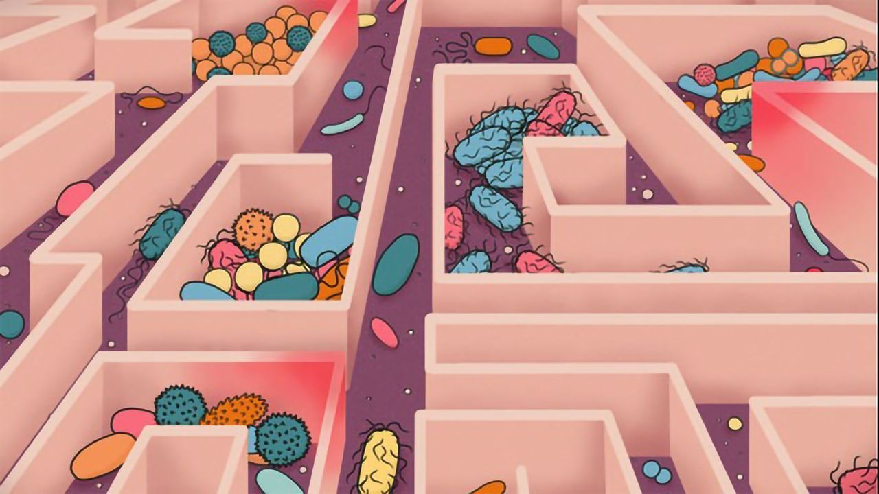 As You Age, So Does Your Microbiome
