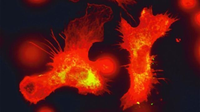 Blood Stem Cells Boost Immunity By Keeping a Record of Previous Infections