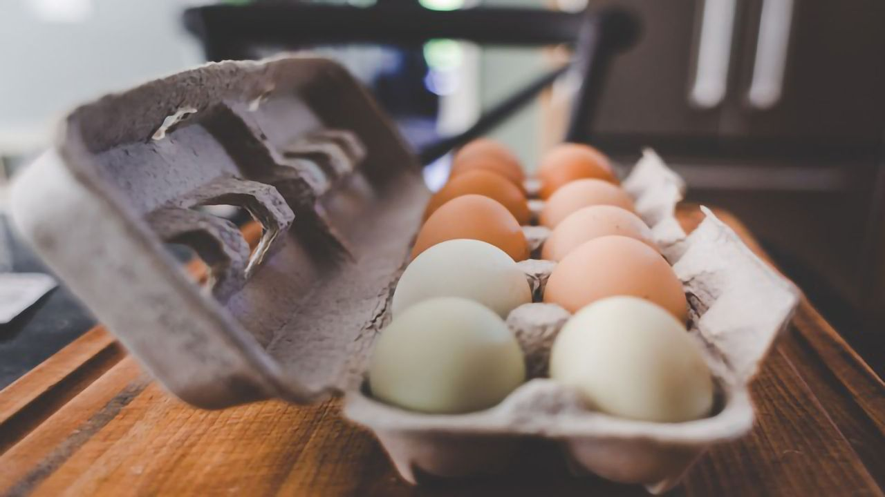 Egg-derived Bioinks for Organ Engineering