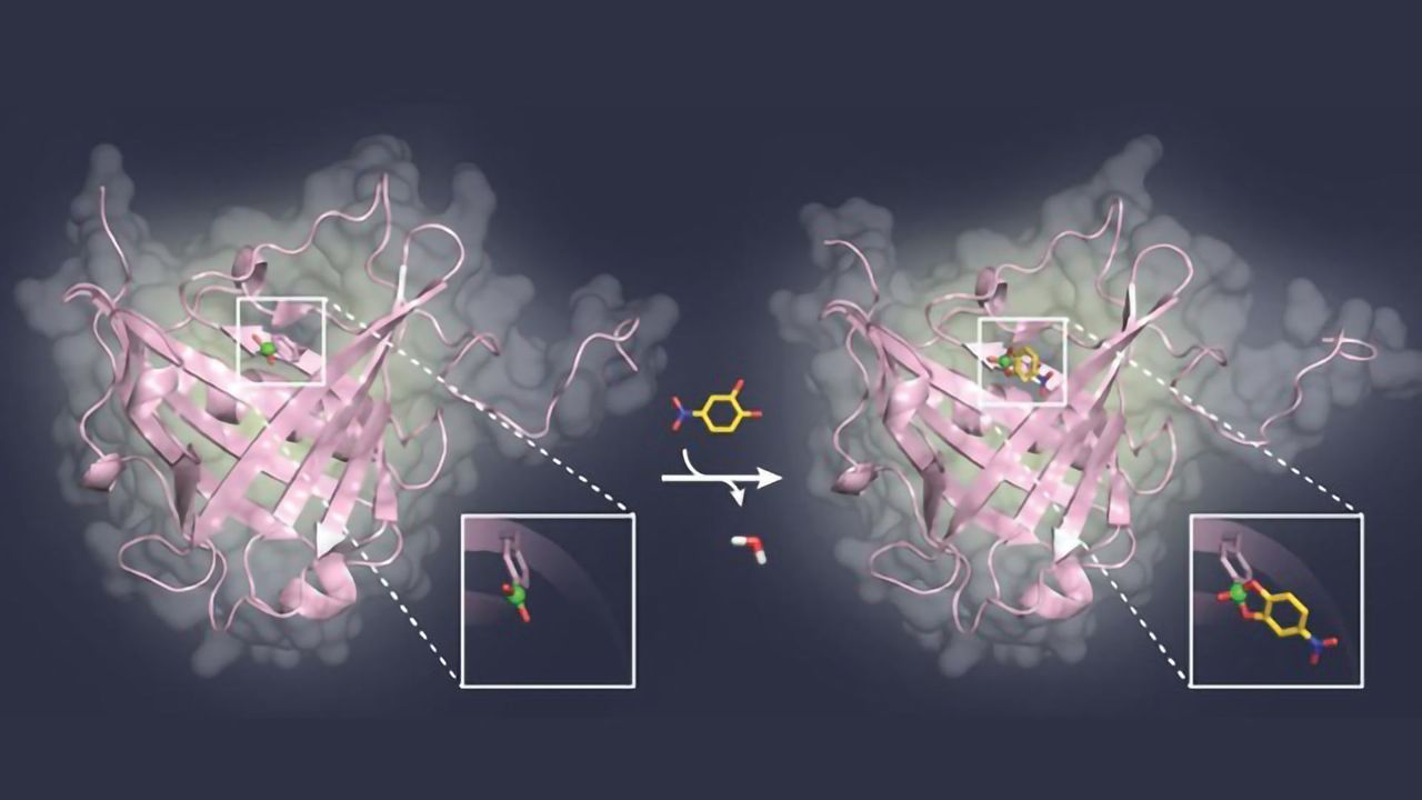 Blocking Sugar Structures on Viruses and Cancer Cells