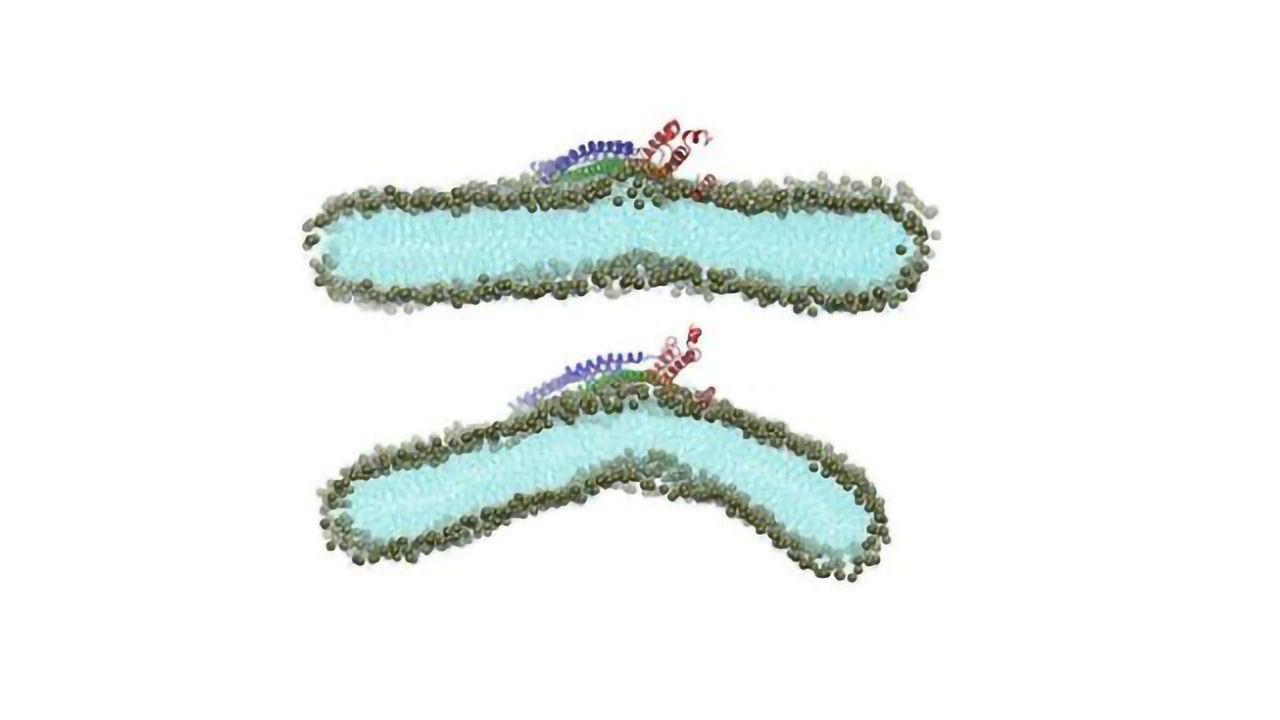 Supercomputers Figure Out How Viruses Attack Cell Membranes