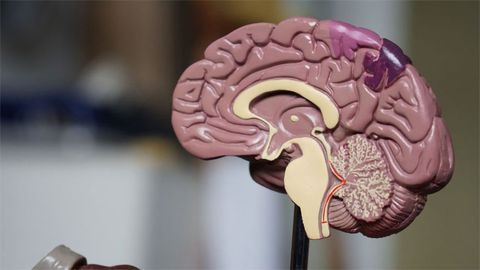 Childhood Neurodegenerative Disorder Identified for the First Time