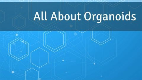All About Organoids