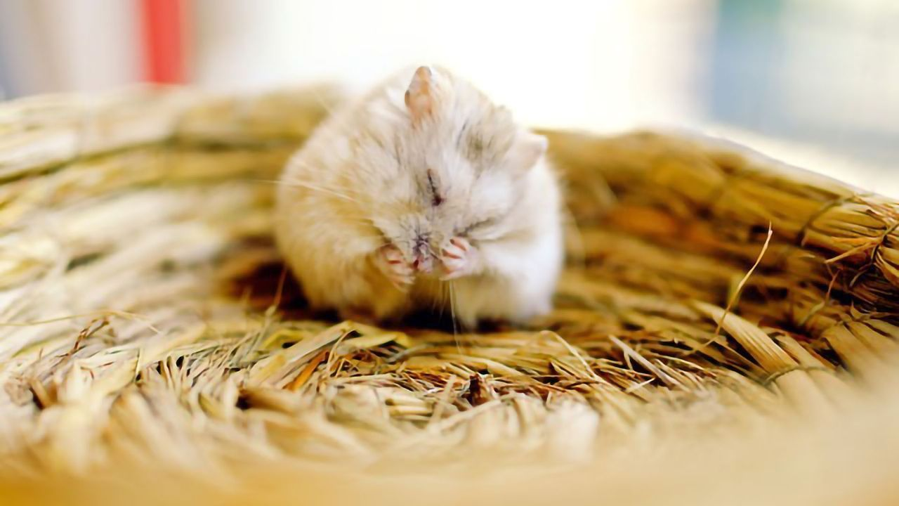 Researchers Identify the Neurons Controlling Non-REM Sleep