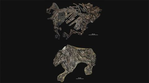 Exceptional Fossils Give Window Into Mammalian Evolution