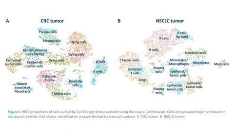 Characterization of the Tumor Microenvironment