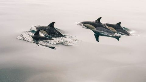 Size of Plastics Animals Can Eat Predicted