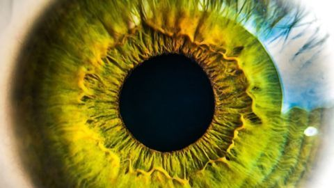 New Advances in the Production of Retinal Cells for Treating Blindness