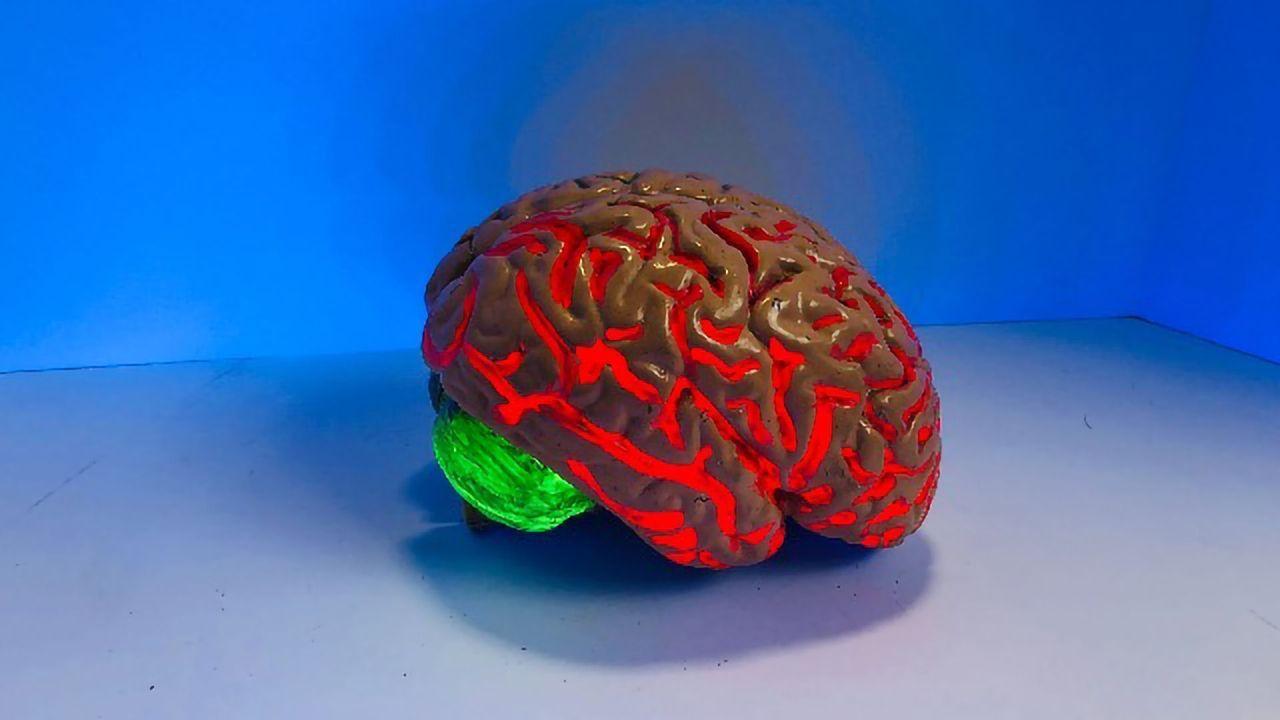 Gene Mutation Enhances Cognitive Flexibility