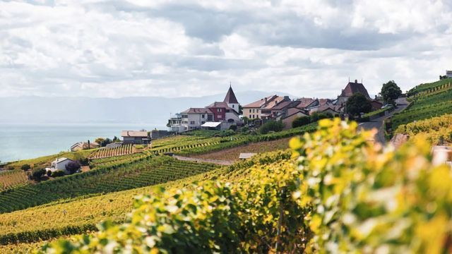 Amoéba Biocontrol Products Selected for Evaluation on European Vineyards