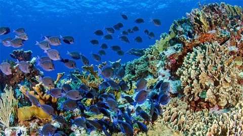 Fish Have Diverse Gut Microbiomes