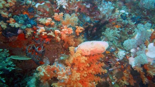 Sea Sponge Molecule May Stop Cervical Cancer Cell Growth