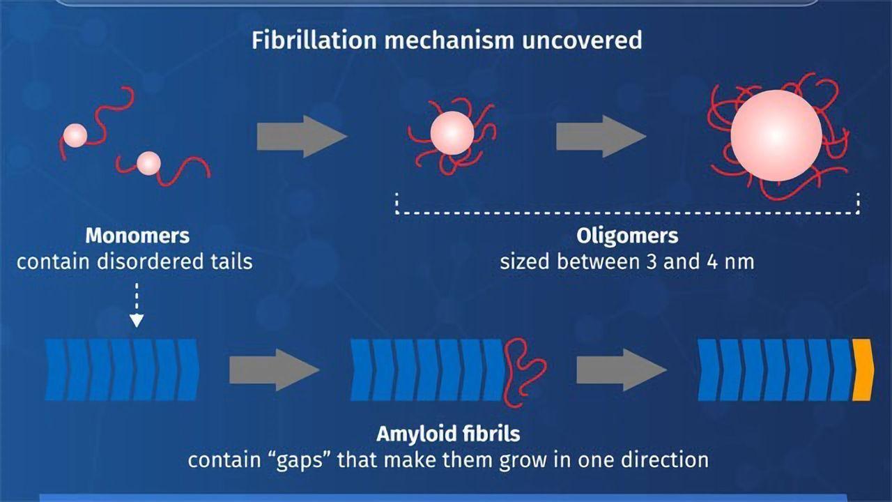 Yeast Prions Help Researchers Understand Neurodegenerative Diseases