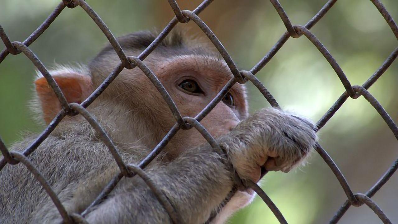 Activities That Threaten Wildlife Also Risk Virus Spillover Into Humans