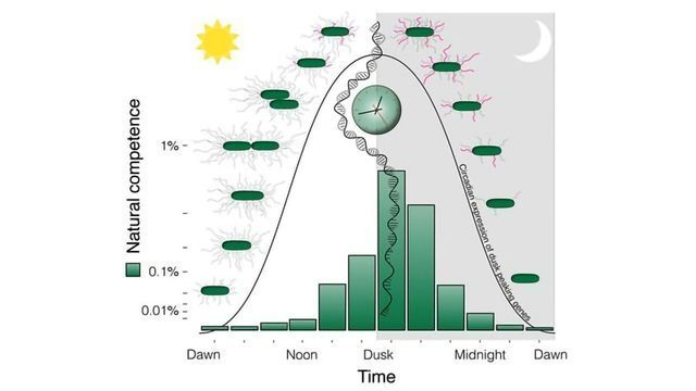 Why Aligning Biological Clock to the Day-Night Cycle Is So Important