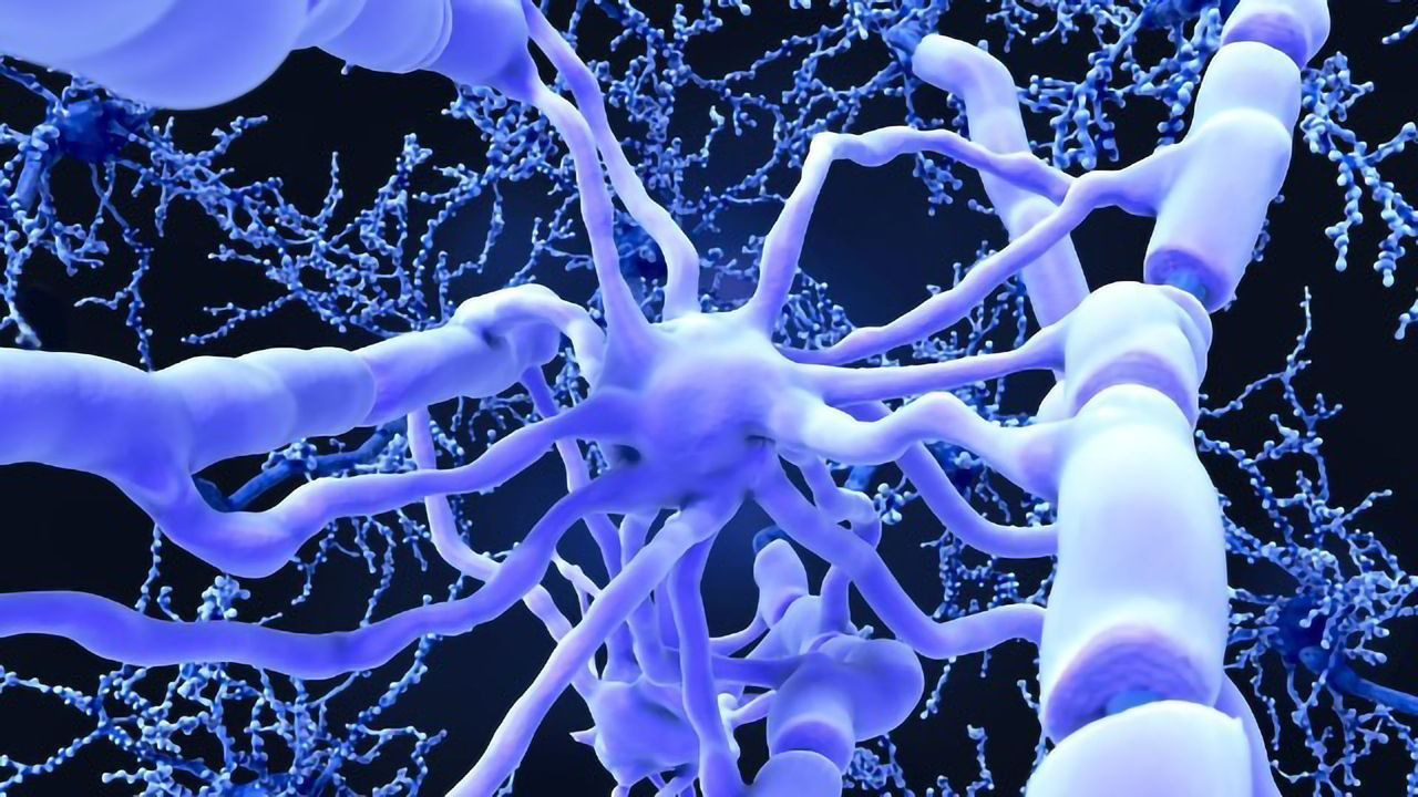 Researchers Have Succeeded in Restoring Mobility and Sensation of Touch in Stroke-Afflicted Rats