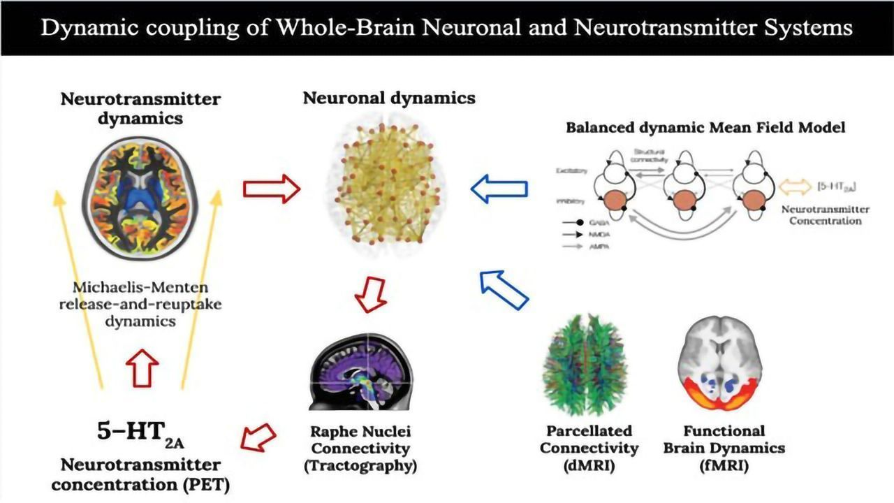 How Brain Systems Interact To Produce Psilocybin's Psychedelic Effects