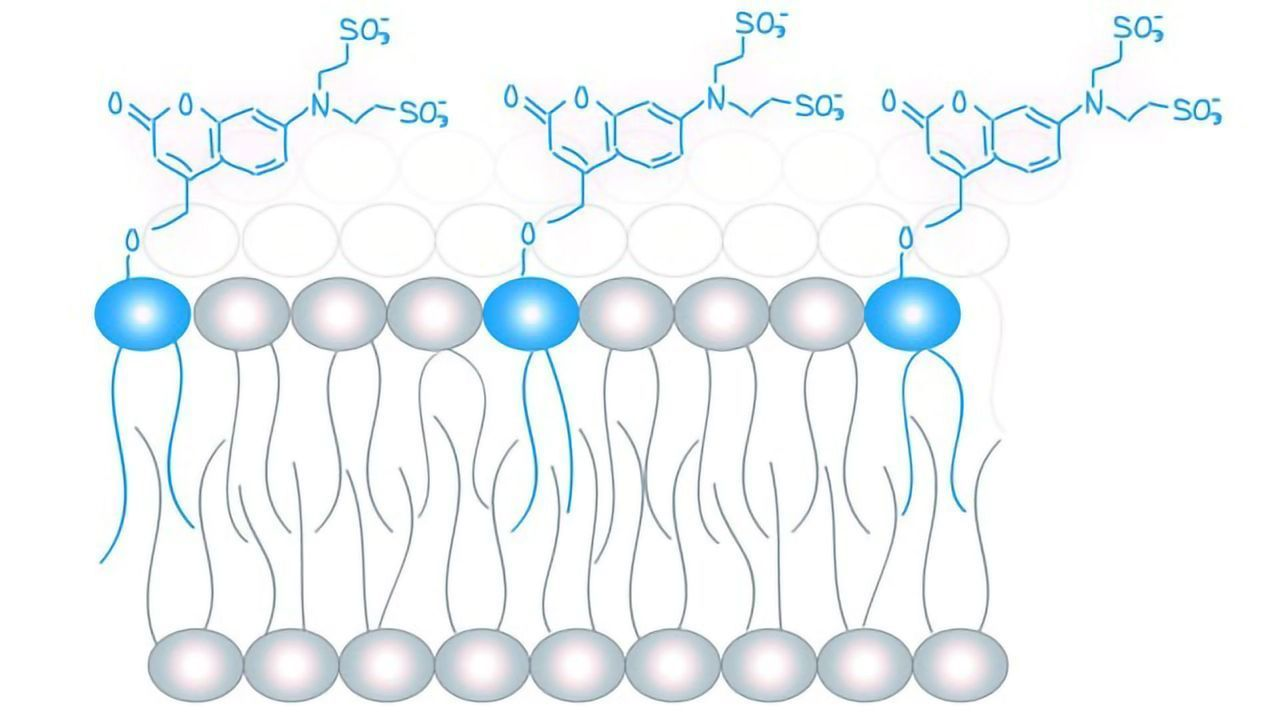 Study Points to Existence of a Lipid Code